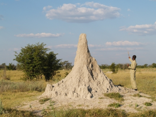 a huge termite mound and our guide