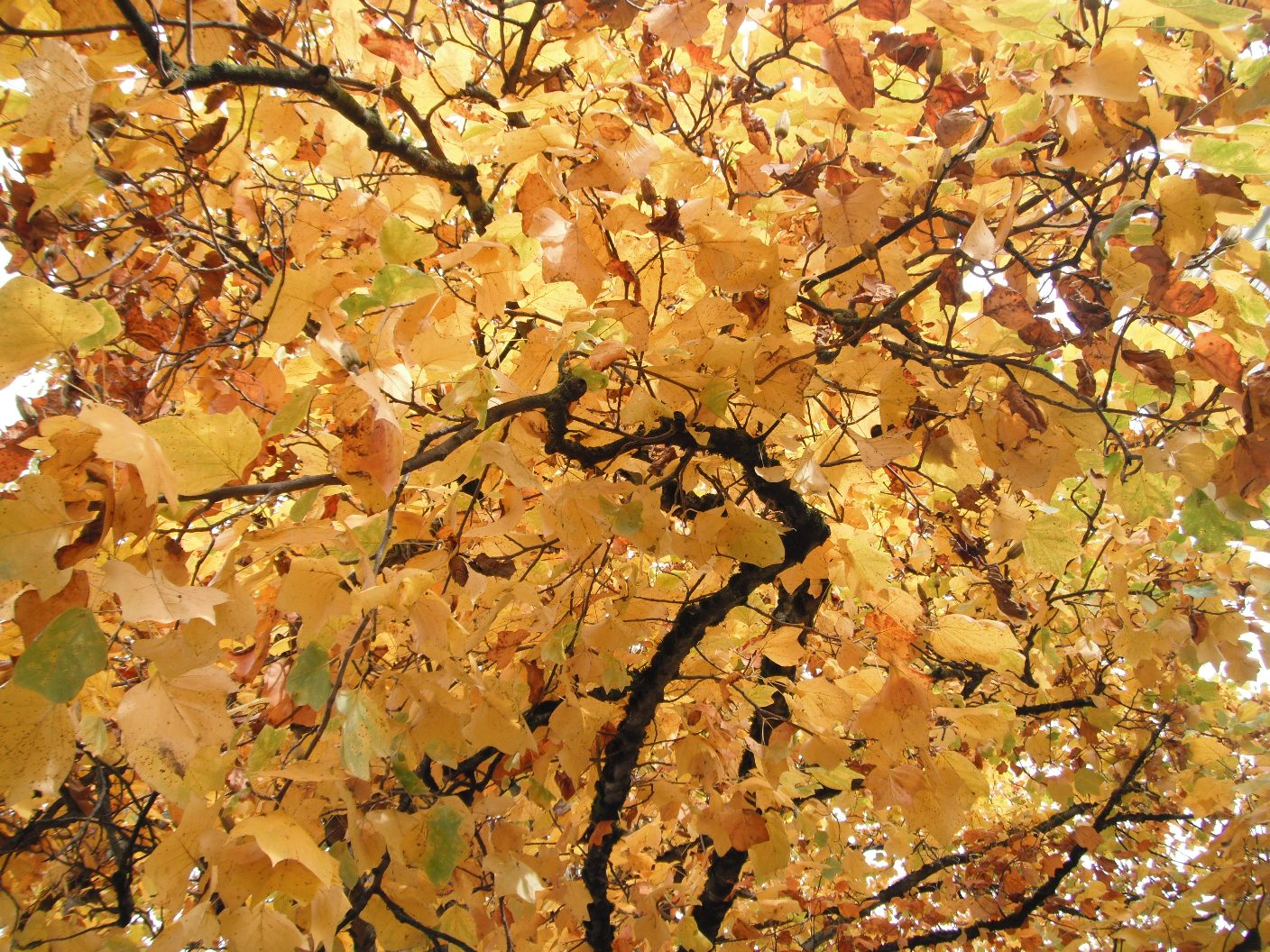 """autumn wind thesis 1create a strong thesis comparing these two poets li bo (daoist's influence) and dufu(confucian's influence)  my thatched roof is ruined by the autumn wind"""" i ."""