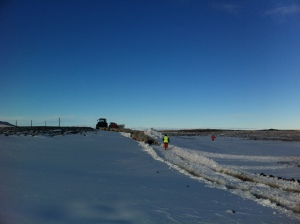 herding sheep through the snow