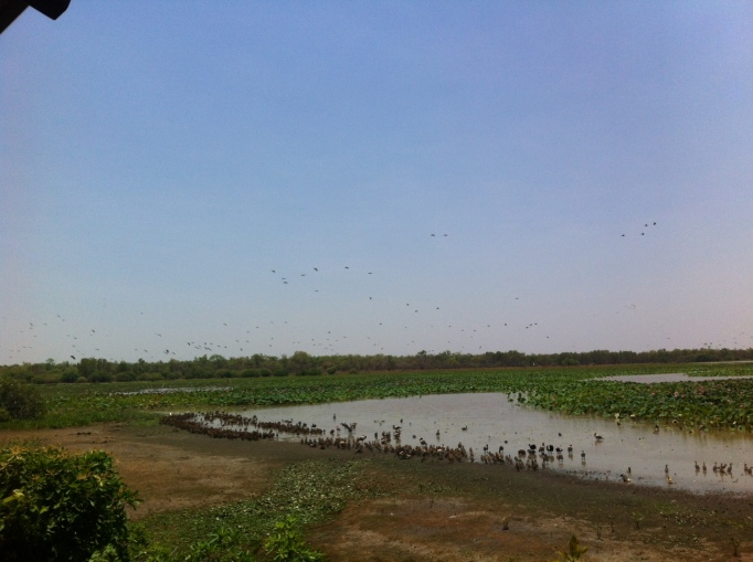 a dwindling billabong, crowded with birds