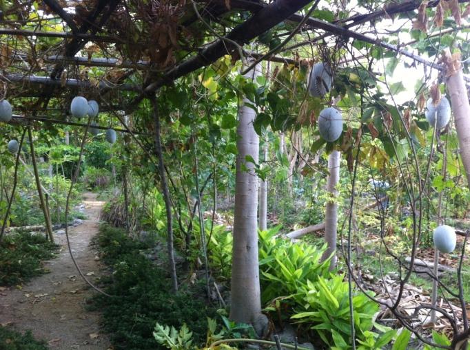 Fernando's garden