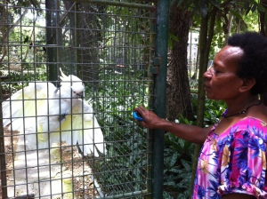the cockatoo begs for a scratch from the meri