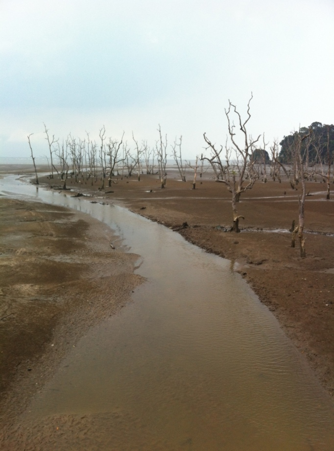 Bako National Park at low tide