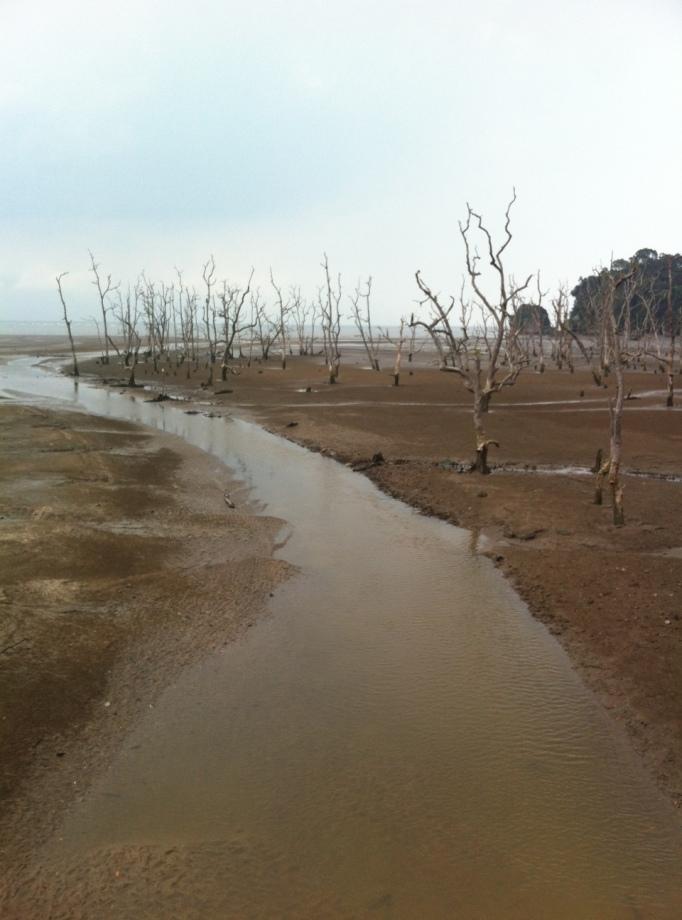 Bako National Park at low tide