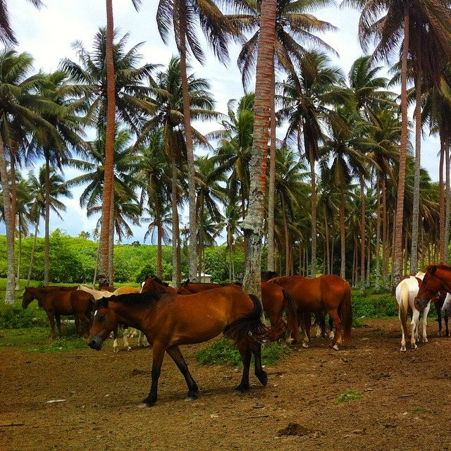 tropical horse paradise