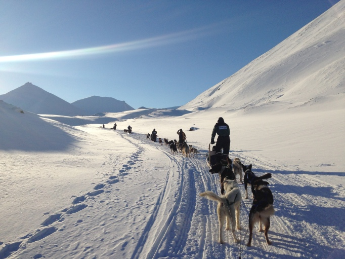 Dogsledding in Svalbard on a chilly but beautiful day